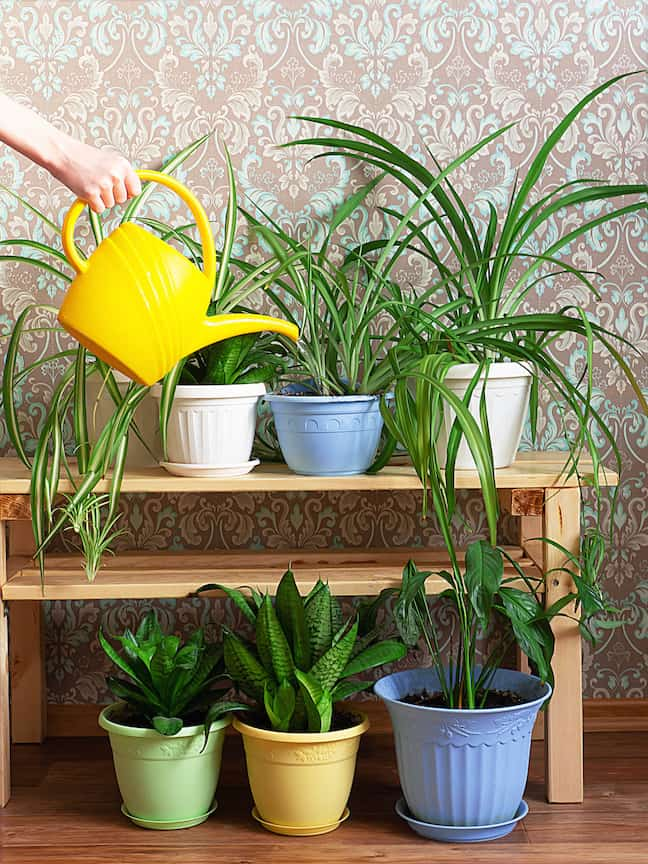 watering your plants