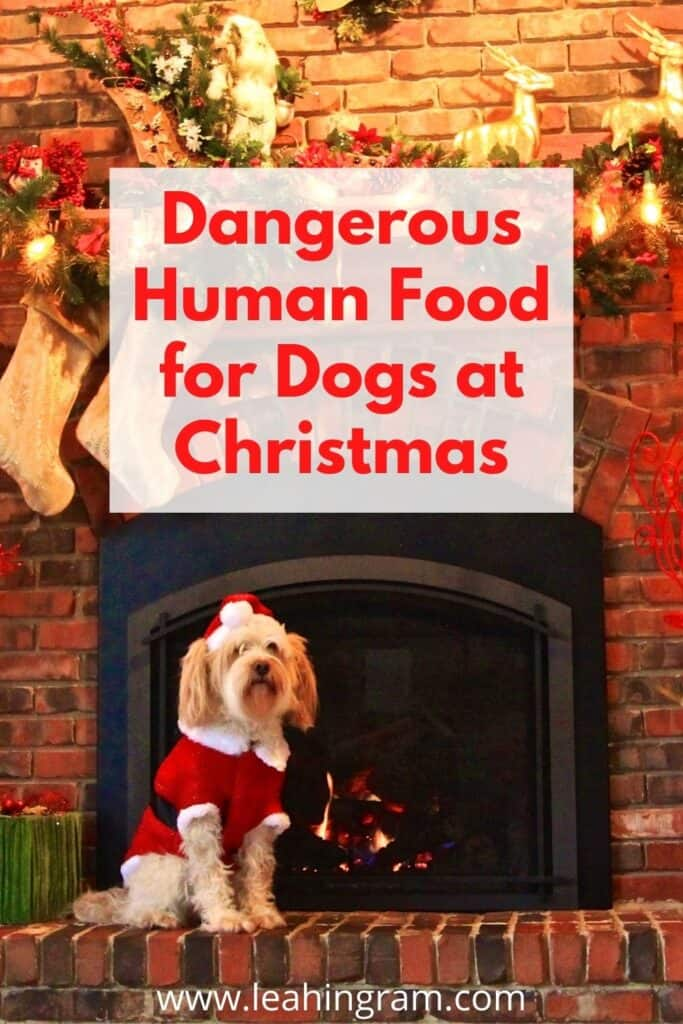 dangerous human food for dogs at christmas