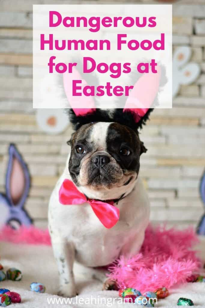 dangerous human food for dogs at easter
