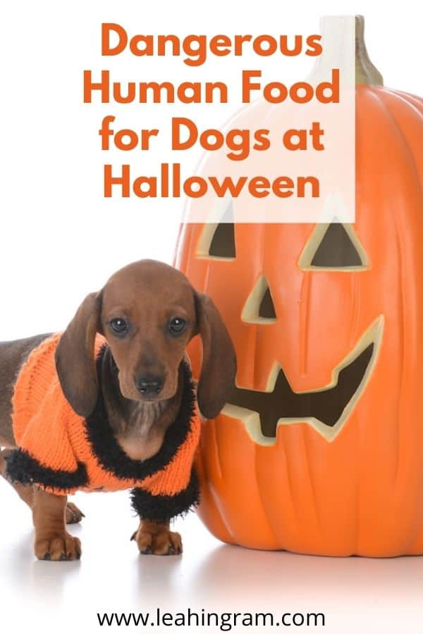 Dangerous Human Food for Dogs at halloween