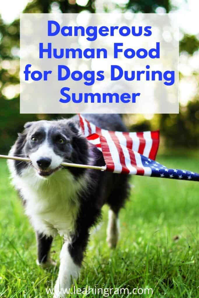 dangerous human food for dogs at summer holidays