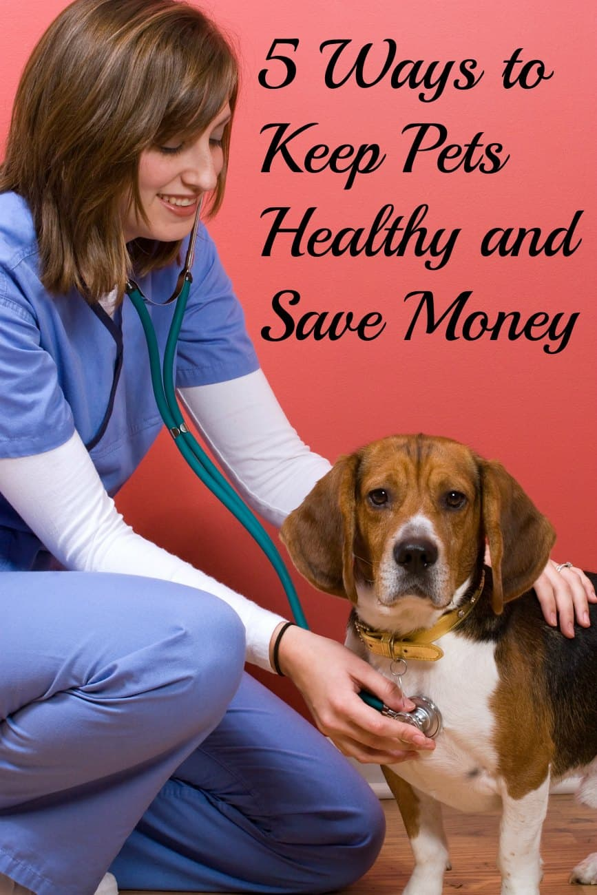 5 Ways to Keep Pets Healthy and Save Money