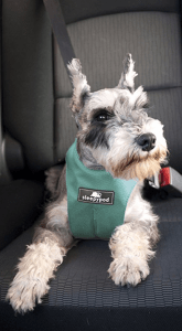 sleepypod car dog harness safety tested