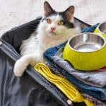 pet friendly travel with pets
