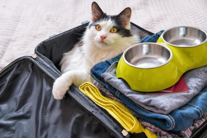 5 Tips for Travel with Pets