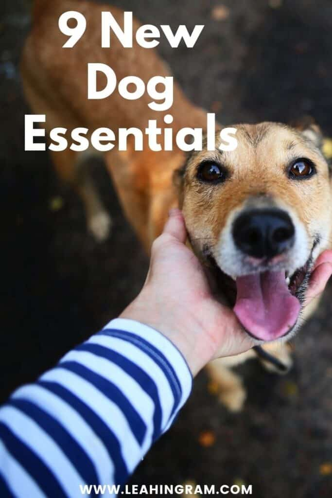 must haves when you adopt a dog new pin 2