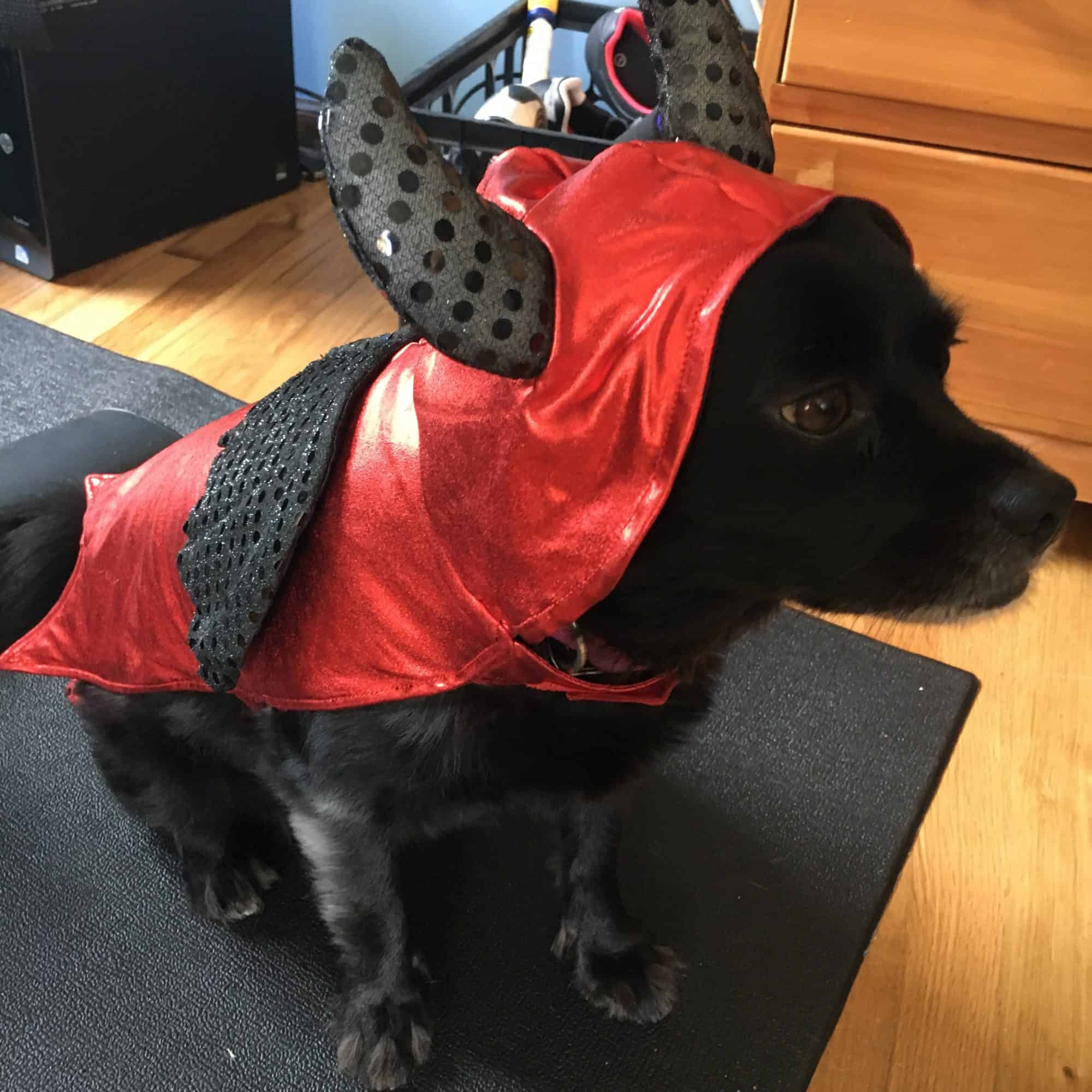 Awesome Dog Costumes for Halloween