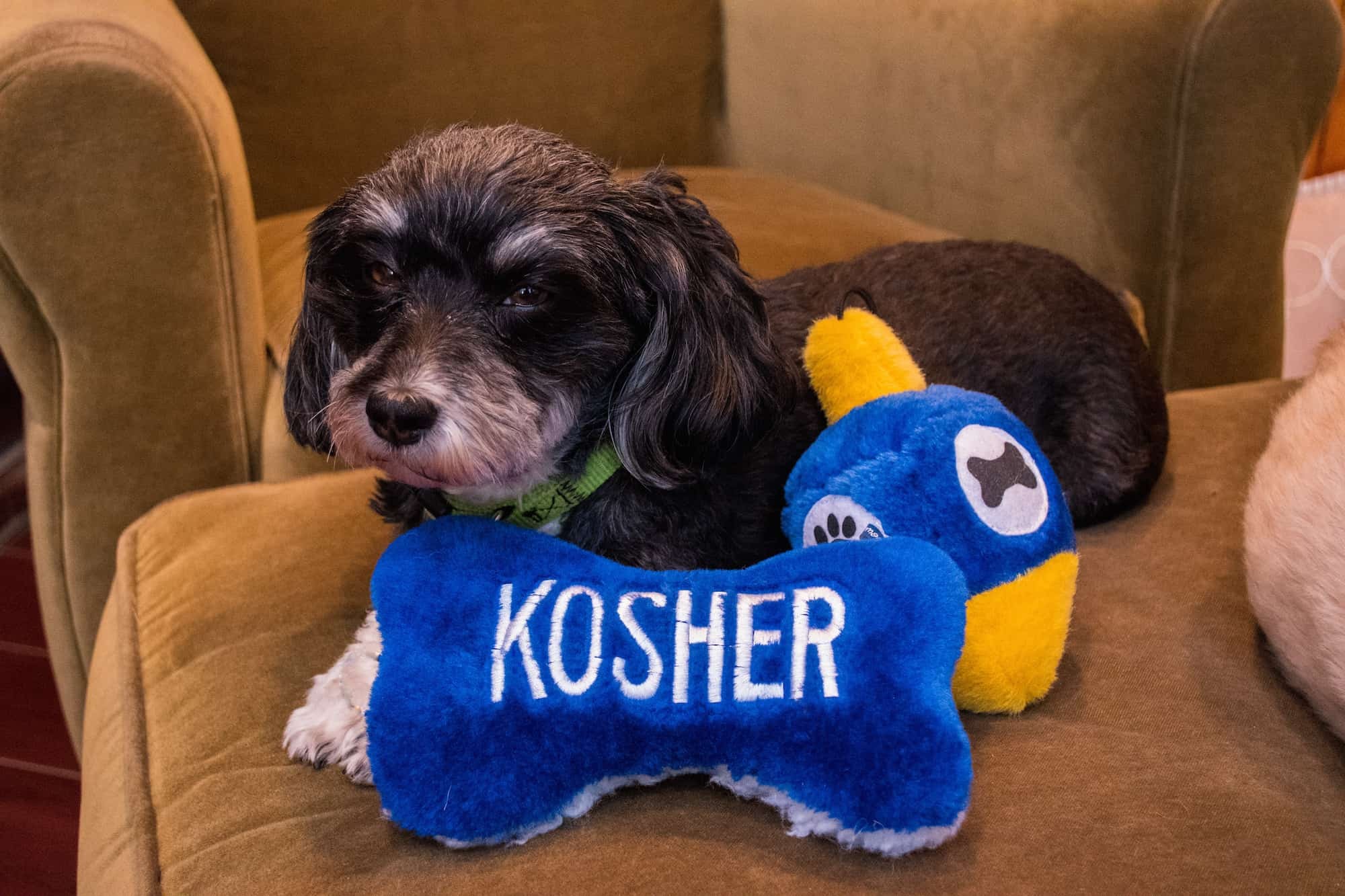 chanukah gifts for pet lovers