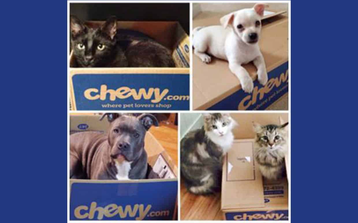 chewy boxes