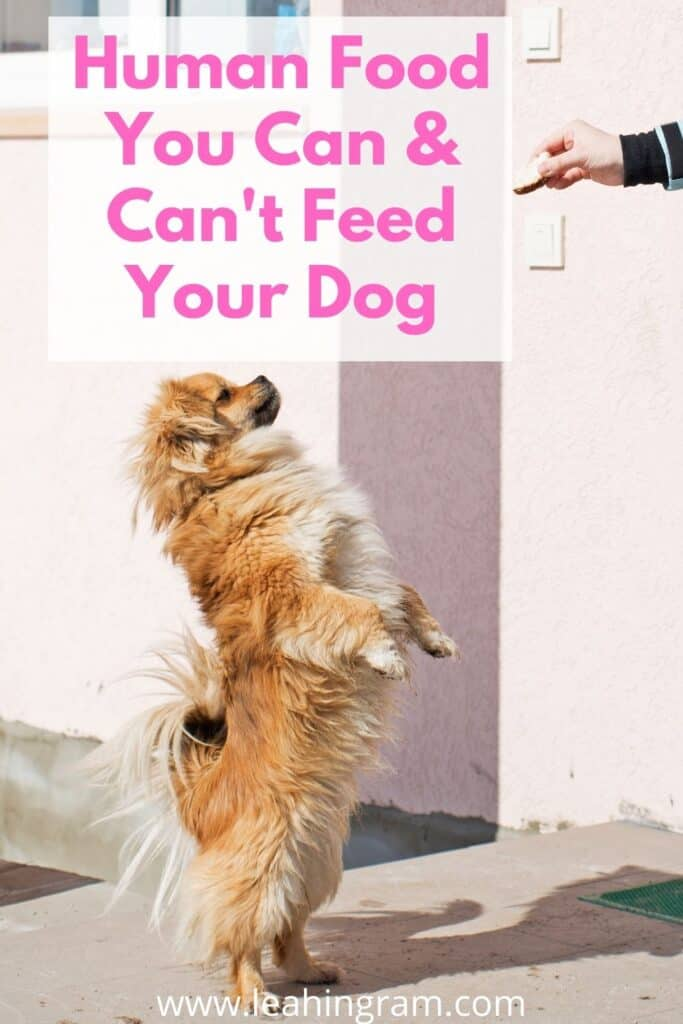 Human Food You Can & Can't Feed Your Dog pin