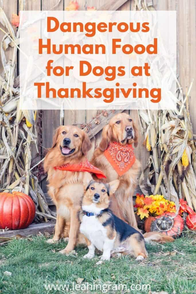 Dangerous Human Food for Dogs at Thanksgiving